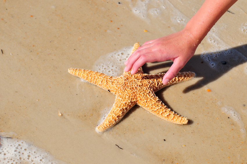 Child Reaching for Starfish